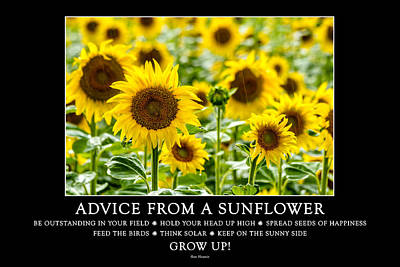 A Sunny Morning Photograph - Advice From A Sunflower by Teri Virbickis