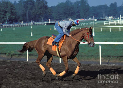 Affirm Photograph - Affirmed - Triple Crown Winner by Marc Bittan