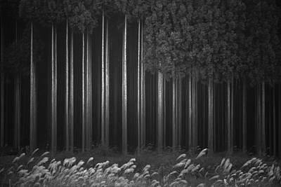 Abstract Landscape Photograph - Afforestation by Tsuneya Fujii