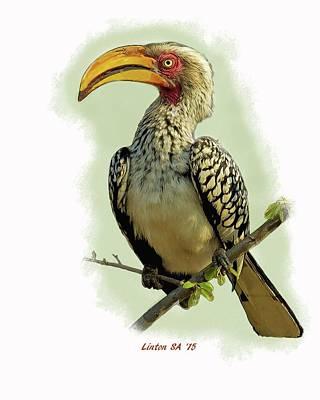 Hornbill Digital Art - African Hornbill by Larry Linton