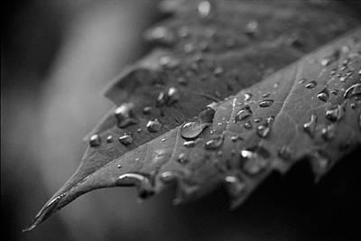 After The Morning Rain Print by Jon Woodhams