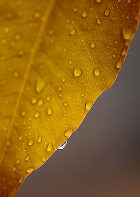 Wet Leaves Photograph - After The Rain by Stephen Anderson