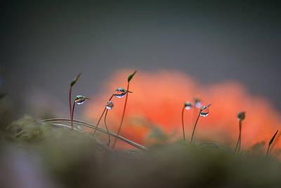 Landskape Photograph - After The Rain by Zelma Brezinska
