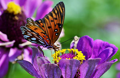 Fluttering Photograph - Afternoon Delight by Melanie Moraga
