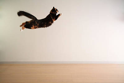 Animal Themes Photograph - Airborne Cat by Junku