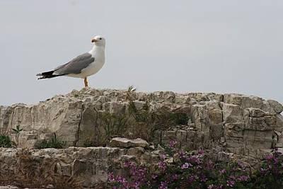 Albatross2, Sile Original by Yesim Tetik