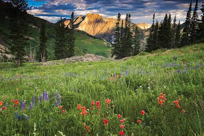 Albion Basin Wildflowers Print by Utah Images
