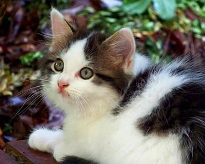 Kitten Photograph - Alert by Jai Johnson