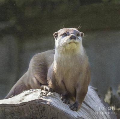 Otter Digital Art - Alert Otter Amblonyx Cinerea by Liz Leyden