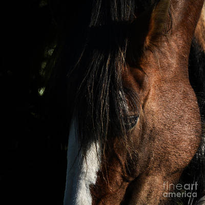 Alfie. Up Close And Personal 2. Print by Paul Davenport