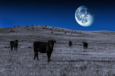 Angus Steer Photograph - Alien Cows by Todd Klassy
