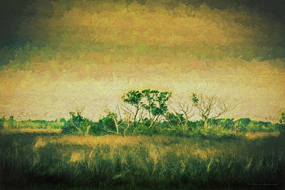 Everglades Photograph - All Alone by Marvin Spates