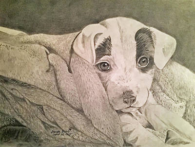 Brenda Brown Art Drawing - All Clean And Ready To Play by Brenda Brown