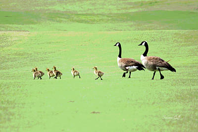 Geese Digital Art - All In The Family II by Suzanne Gaff
