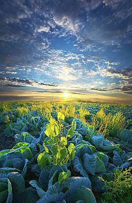 Cabbage Photograph - All Joined As One by Phil Koch