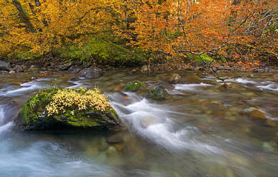 Fall Photograph - All That Is Gold by Mike  Dawson