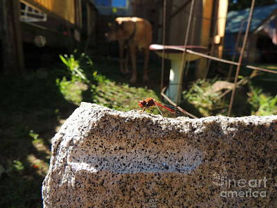 Metal Dragonfly Photograph - All Things by Mim White