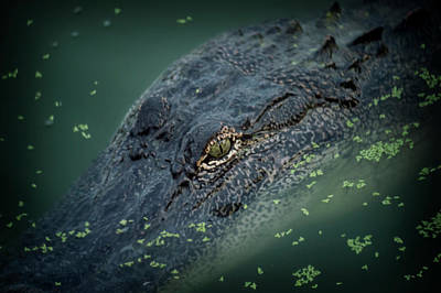 Alligator  Print by Alicia Morales