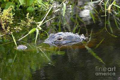Alligator Hunting Print by David Lee Thompson