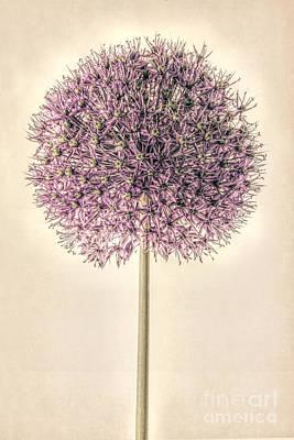 Fragility Digital Art - Allium Alone by John Edwards