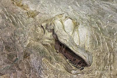 Dinosaur Photograph - Camarasaurus by David Millenheft
