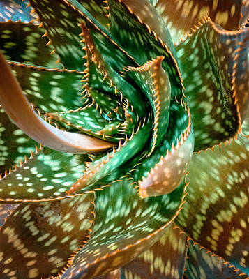Aloe Saponaria, Soap Aloe Maculata Print by Frank Tschakert