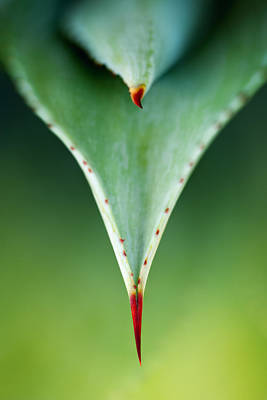 Aloe Thorn And Leaf Macro Print by Johan Swanepoel