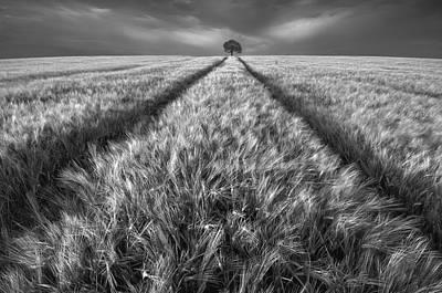 Windy Photograph - Alone by Piotr Krol (bax)
