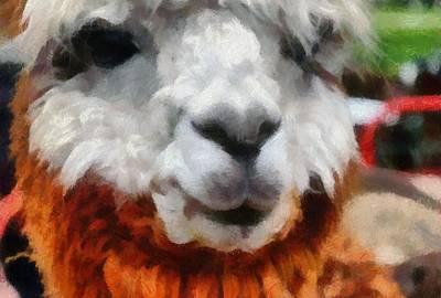 Alpaca Print by Michelle Calkins
