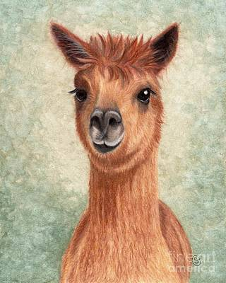 Llama Drawing - Alpaca - So Sweet by Sherry Goeben