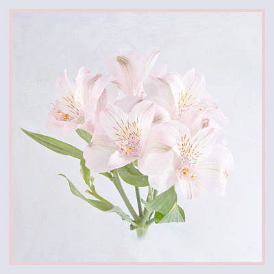 Lily Of The Incas Photograph - Alstroemeria 2 by Robert Murray