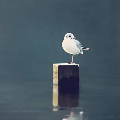 Sea Gull Photograph - Am I Alone by Wim Lanclus