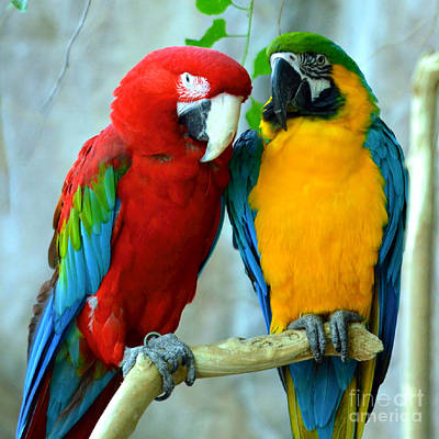Amazon Parrots Print by Dani Stites