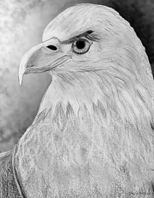 American Bald Eagle Drawing Print by Sabrina K Wheeler