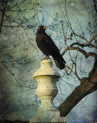 American Crow Print by Gothicolors Donna Snyder