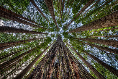 Forrest Photograph - American Giants In Australia by Doug Gimesy