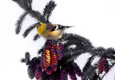 Photograph - American Goldfinch by Andrea Kollo