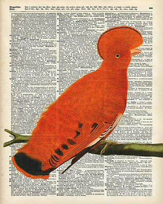 Illustration Painting - American Martinet Orange Parrot Bird by Jacob Kuch