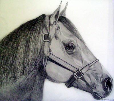 American Quarter Horse Print by Gary Stull