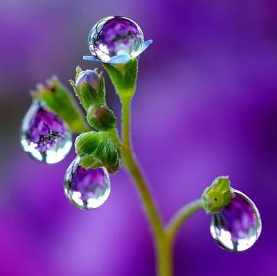 Natures Wonderful Colors Digital Art - Amethyst Drops by Yuri Hope