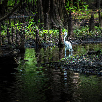 Wading Bird Photograph - Amidst The Knees by Marvin Spates