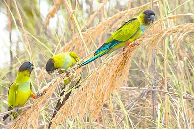 Parakeet Digital Art - Amigos by Janal Koenig