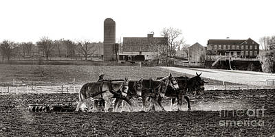 Amish Farmer Photograph - Amish Agriculture  by Olivier Le Queinec