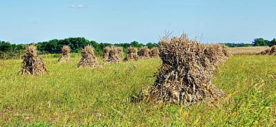 Photograph - Amish Harvest by Cricket Hackmann