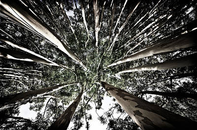 Warrawong Photograph - An Ants View by Craig Hender