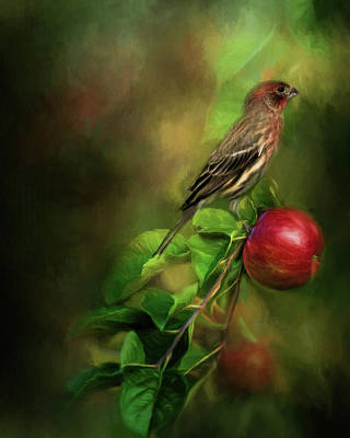 Finch Photograph - An Apple A Day by Lana Trussell