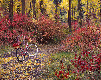 Wistful Photograph - An Autumn Bike Trek by Leland D Howard
