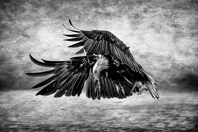 An Eagles Quest D9724 Print by Wes and Dotty Weber