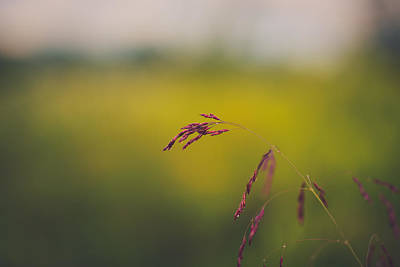 Virginia Photograph - An Early Morning by Shane Holsclaw