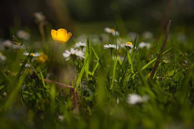Buttercup Photograph - An Inner Light by Chris Fletcher